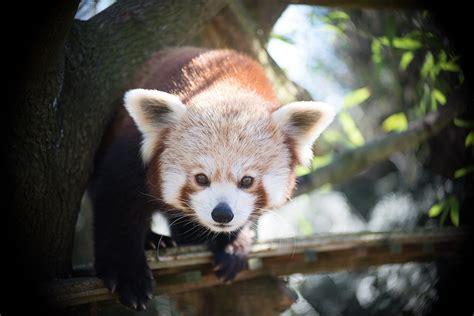 Touroparc Zoo — Wikipédia