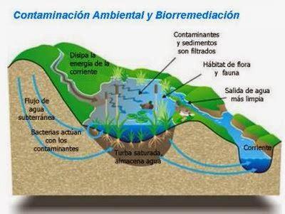 Trabajos de ABG: Biotecnología ambiental.