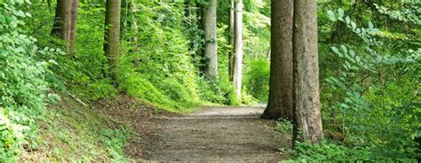 Trails Near Me   The Most Beautiful Hiking Trails