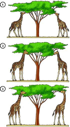 Transformismo de Lamarck   La evolución