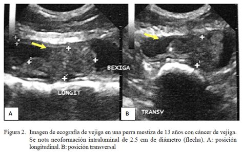 Transitional cell carcinoma in dogs: a report of two cases ...