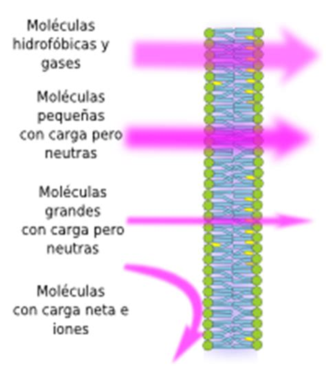 Transporte Celular 2014: Canales Ionicos, Propiedades ...