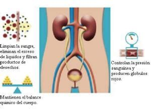 Trastornos urinarios – Ciencias Médicas