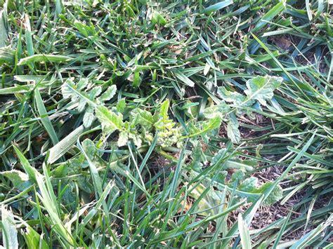 Tratamientos herbicidas | Safitra s.a.