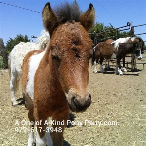 Travel Petting Zoo   Petting Zoo Dallas   A One of a Kind ...