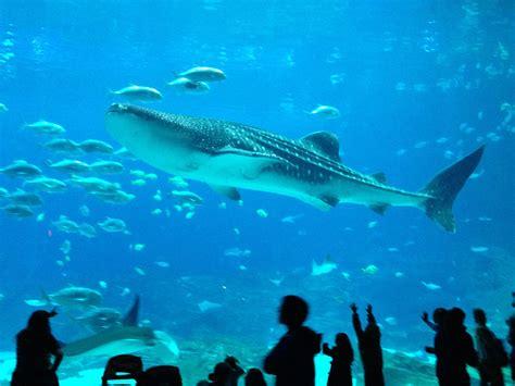Travel Tips: Georgia Aquarium – or – Damn, those are ...