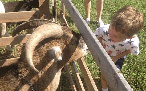 Traveling Petting Zoo   Cowboy Critters Petting Farm ...