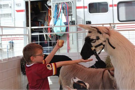 Traveling petting zoo draws patrons to local WV grocery ...