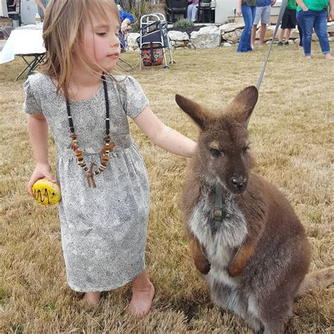 Traveling Petting Zoo   Exotic Animals & Reptiles in San ...