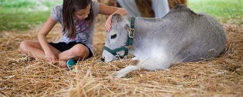 Traveling Petting Zoo & Pony Rides in Virginia   The Teeny ...