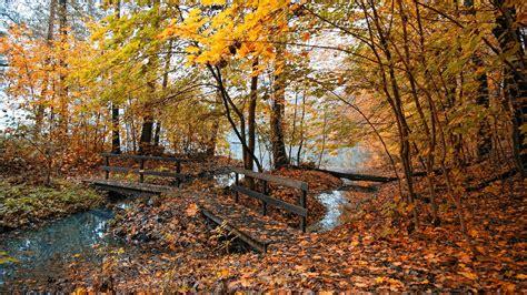 Trees in autumn   Nature s Seasons Wallpaper  22174163 ...