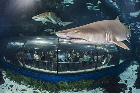 Tripadvisor | Entrada Evite las colas al acuario de ...