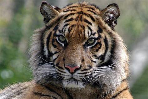 TripAdvisor | Ingresso evite filas para o Zoológico de ...