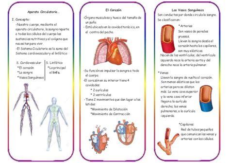 Triptico Del Sistema Circulatorio...