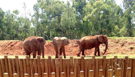 Trois éléphants au zoo de Temara   Photo de Jardin ...