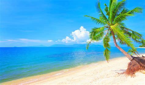 Tropical Beach 4k Ultra HD Wallpaper   Background Image ...
