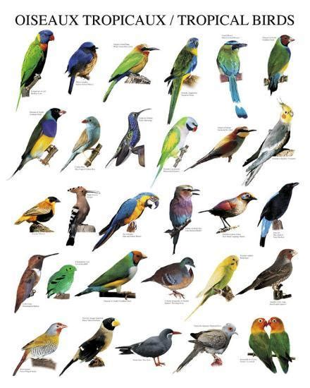 Tropical Birds  Posters   | AllPosters.com