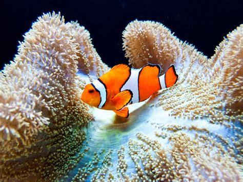 Tropical Fish   Animals Photos