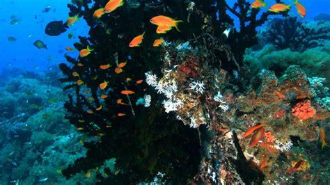 Tropical fish species you can find   Situ Island