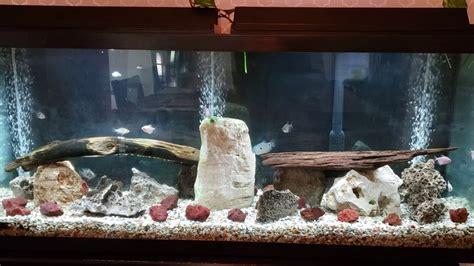 Tropical fish   YouTube