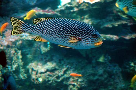Tropical Salt Water Fish Free Stock Photo   Public Domain ...