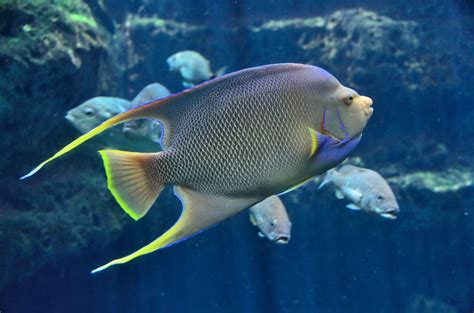 Tropical Saltwater Fish Free Stock Photo   Public Domain ...