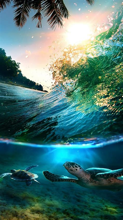 Tropical Sea Island Turtles   Nature, Nature photography ...