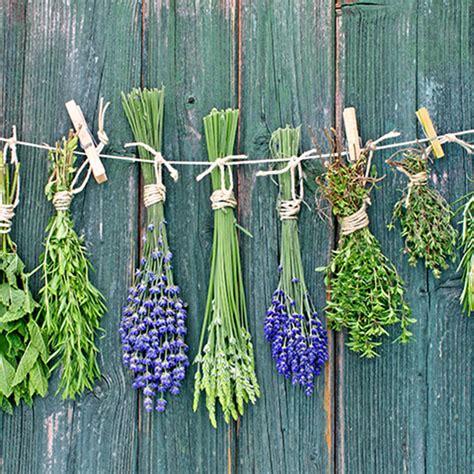 Trucos para conservar más tiempo las hierbas aromáticas ...