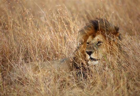 Tu viaje a Kenia | Safari en Masai Mara y Samburu | TRAVEL ...