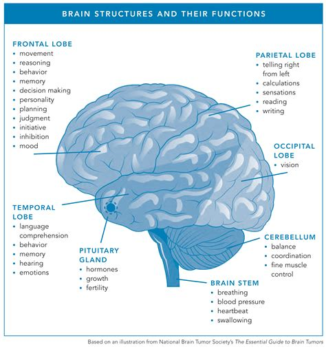 Tumor: Different Types Of Brain Tumors