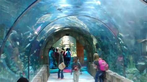 Túnel do aquário!   Picture of Audubon Aquarium of the ...