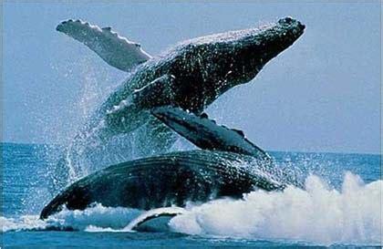 Turismo en Fotos: Los 5 destinos para observar Ballenas