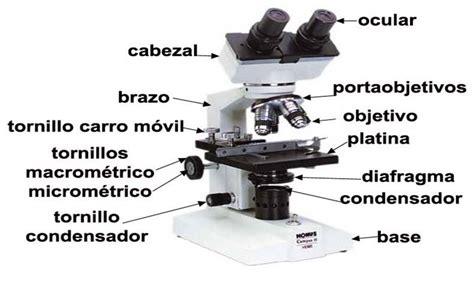Tus clases de Biología: Microscopio