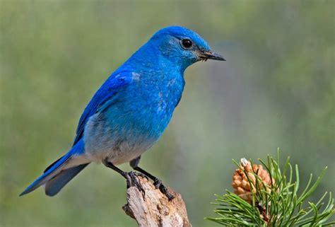 Twitter: Evolución del logo y ¿cómo se llama el pájaro?