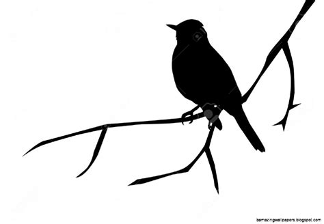 Two Birds On Branch Silhouette | Amazing Wallpapers