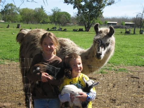 Two By Two Ranch & Petting Zoo   Ranches   13080 Hosler ...