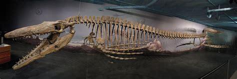 Tylosaurus | The Dinosaur Stop