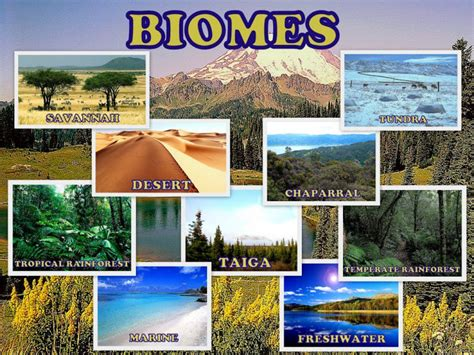 Types of Ecosystems | HubPages