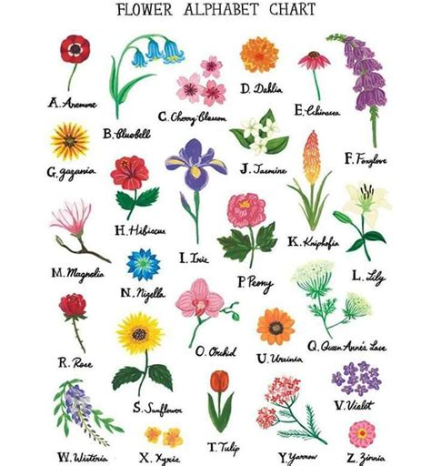 Types of flowers according to the alphabet  in 2020 ...