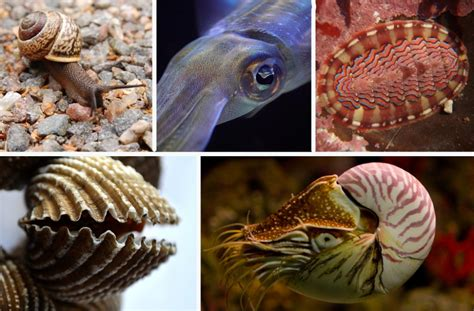 Types of Mollusk: Snails, Bivalves, Squid, and More ...