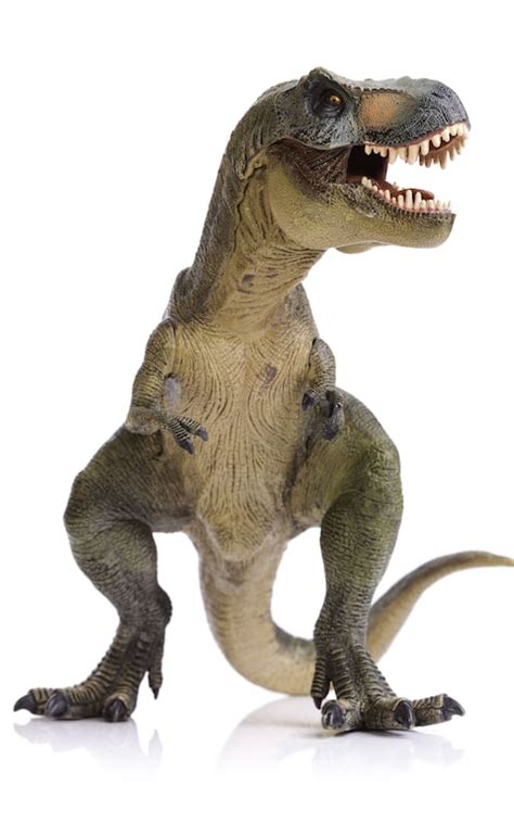 Tyrannosaurus rex was a sensitive lover, scientists find