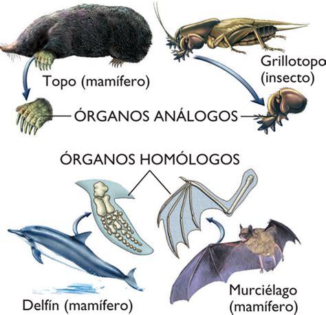 U.E.P.I. Biología: Evolución Biológica y sus pruebas