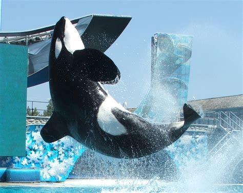 Ulises  orca    Wikipedia, la enciclopedia libre