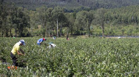 Últimas noticias sobre Agricultura. La Voz de Galicia