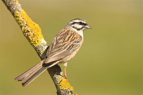 Un 21% menys d ocells al Pirineu   SER Catalunya   Cadena SER