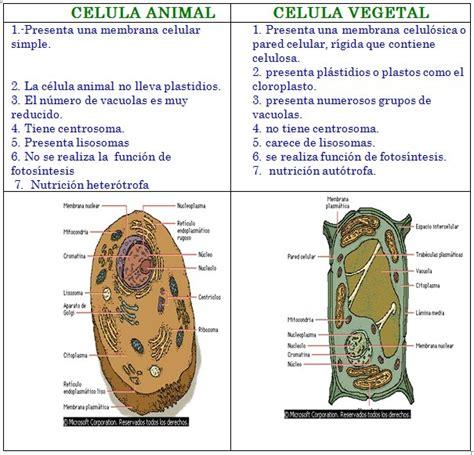 un cuadro comparativo entre la celula vegetal y la celula ...