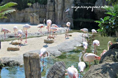 Un día en el Bioparc de Valencia | VIAJES CON PEQUES
