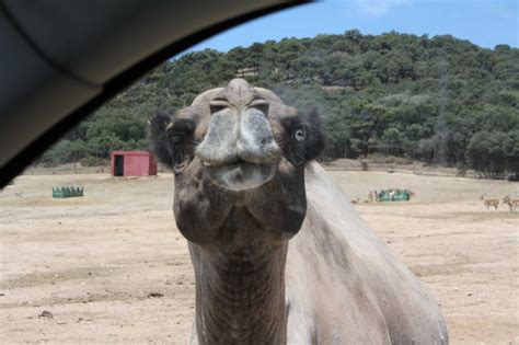 Un día en el Safari Madrid