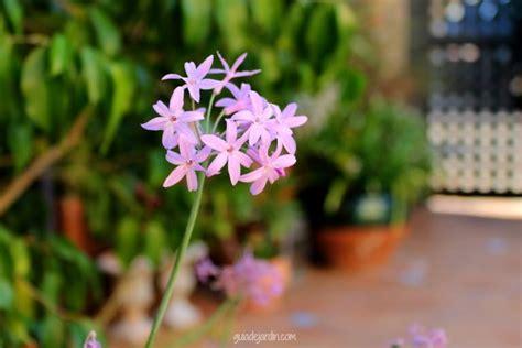 Un día soleado de otoño: plantas y flores de mi terraza ...