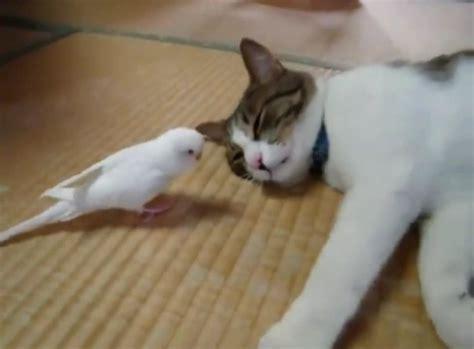 Un gato jugando con un pájaro   Schnauzi.com
